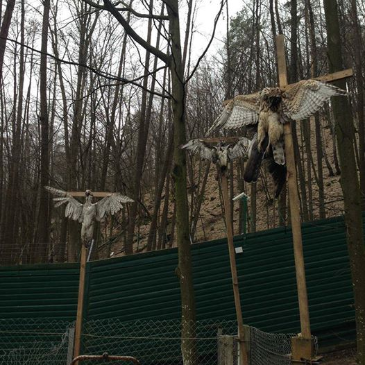 Crucified-birds-at-Yanukovych-residence